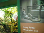 Harry Potter at London zoo.JPG