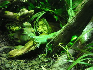 reptile house in london zoo 2.JPG